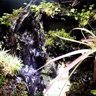 【画像あり】滝が流れるアクアテラリウムの作り方