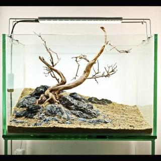 【画像あり】初心者向けアクアリウム水槽レイアウト|基本テクニック11選