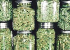 This Is the Only Cannabis Stock Worth Owning Right Now