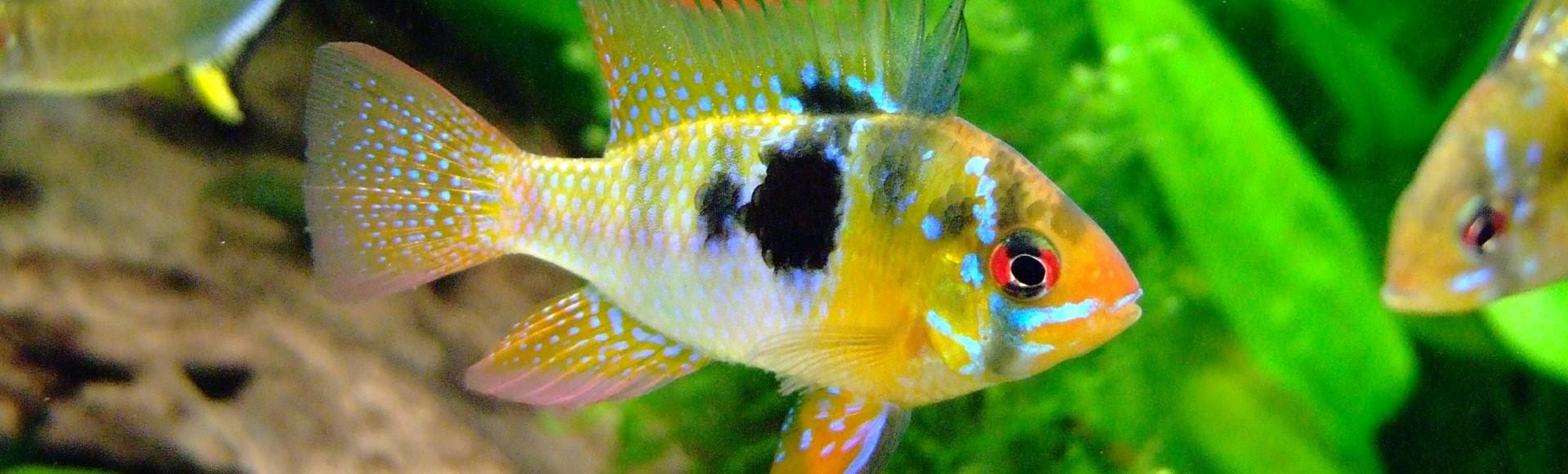 Dimanche 23 Février 2020 – 9ème Bourse aux poissons