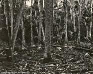 Bulow Woods