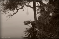 Egret in the fog
