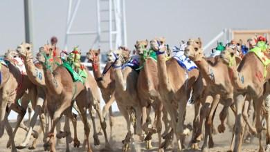 """Photo of بتوجيه ودعم من سمو ولي العهـد :   *""""رماح"""" تحتضن ثالث سباقات الهجن*"""