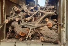 Photo of للحفاظ على البيئة.. مصادرة 120 طنًا من الحطب في 4 مناطق