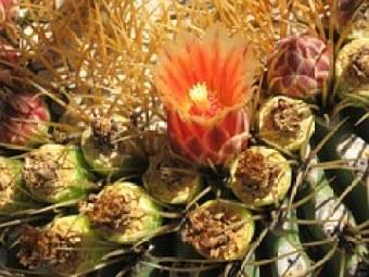cactus-19353__180