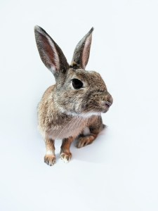rabbit-740869_640