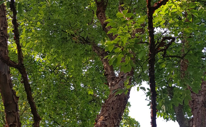 Colleen's 2019 Weekly #Tanka Tuesday #Poetry Challenge #Poet'sChoice #Etheree #Trees #Photography #Bookish