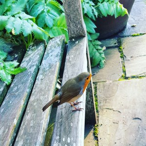 The Magic of the Robin #Spirit #Animal #Encounters #Poetry – Spiritual Sisters – Sisters of The Fey