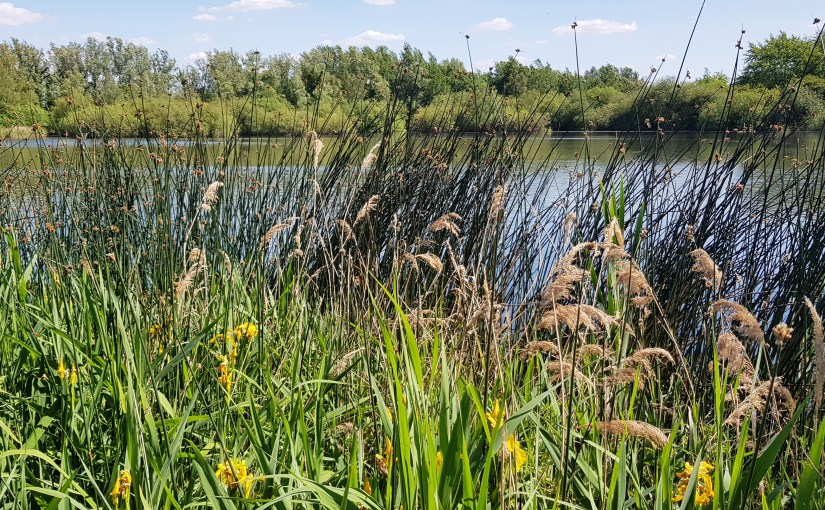 #TANKA TUESDAY #POETRY CHALLENGE NO. 220, @ColleenChesebro #POET'SCHOICE #Swans #Nature #Poetry