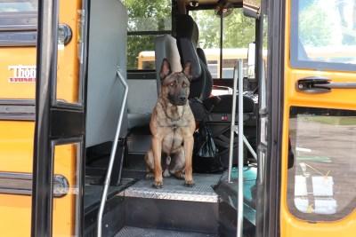 Majlo on Bus