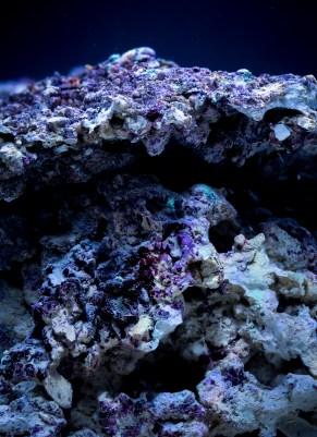 Real reef rock closeup