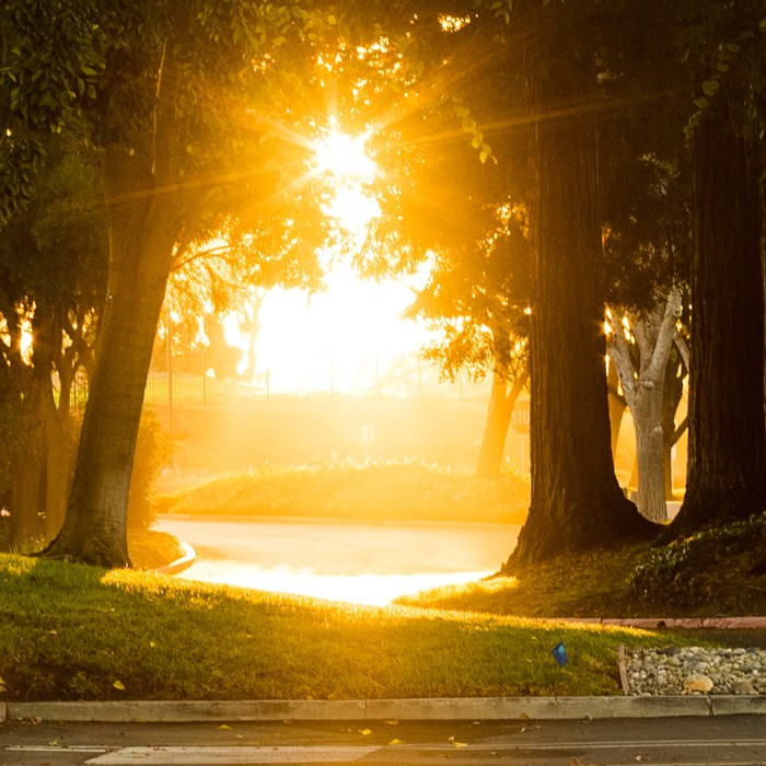 fall morning sunrise warm light trees and glowing sun rays