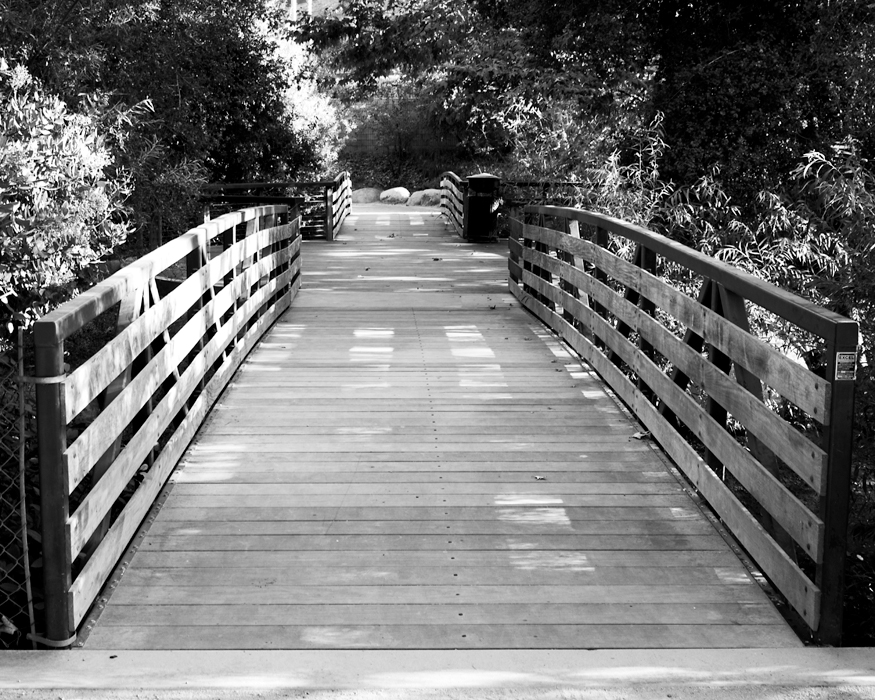 black and white photo bridge with trees