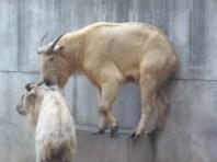 Uhhhh guys...how do I get down?