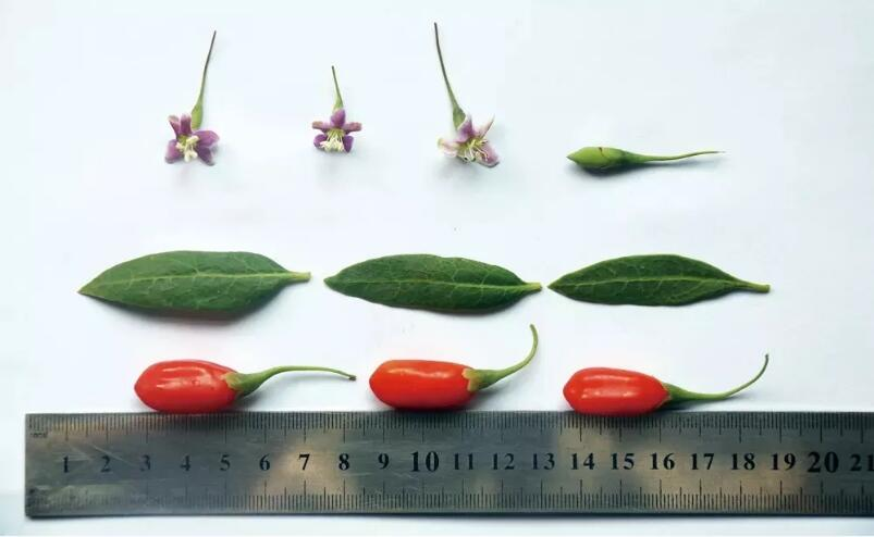 goji berries varieties