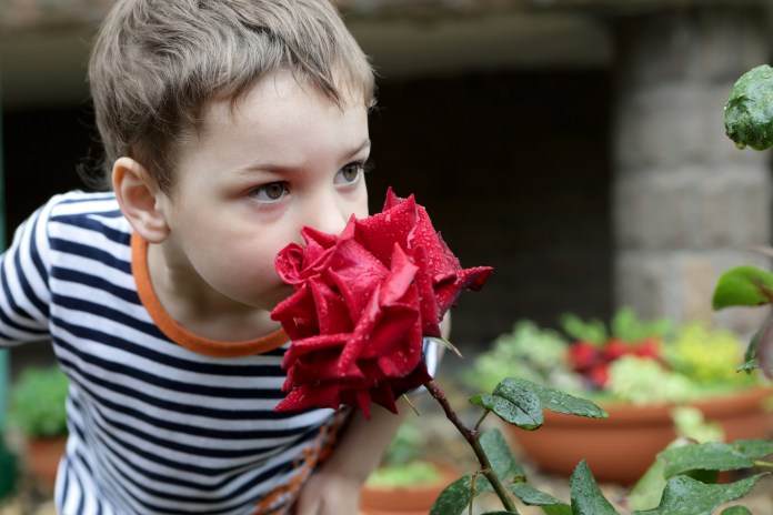 Child smelling red rose in a garden