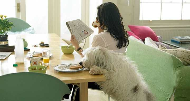 6 mistakes dog owners most often make!