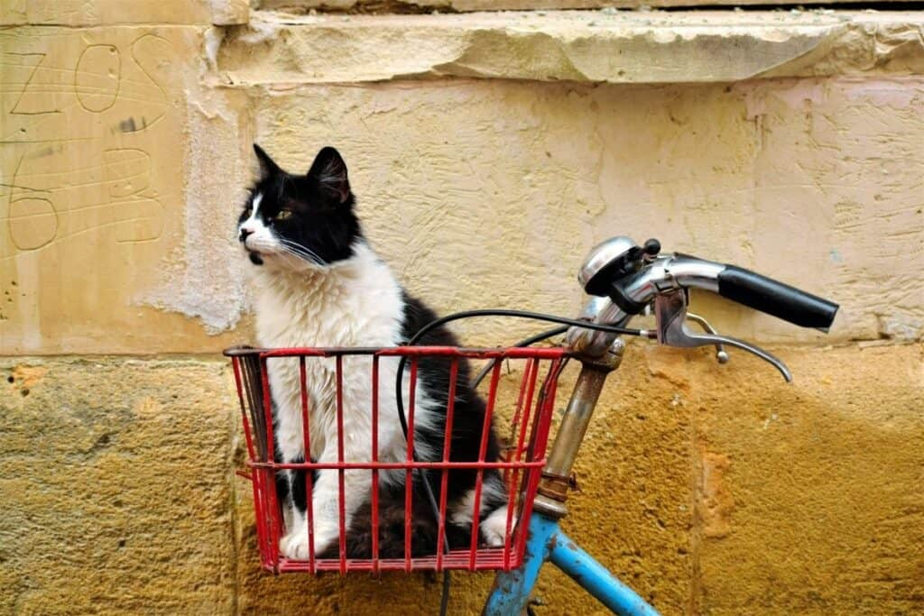 black and white cat sitting inside a red wire bicycle basket