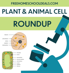 FHD's (and more!) FREE Plant and Animal Cell Resources!   Free Homeschool  Deals © [ 1024 x 1024 Pixel ]