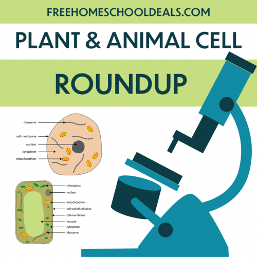 small resolution of FHD's (and more!) FREE Plant and Animal Cell Resources!   Free Homeschool  Deals ©