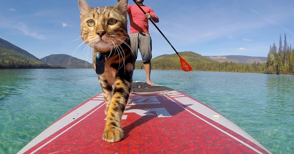 paddle boarding with a