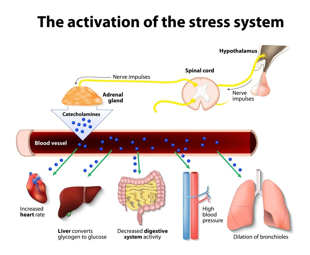 hight resolution of effects of stress on the horse stress system