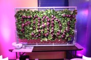 Foodz lettuce display wall