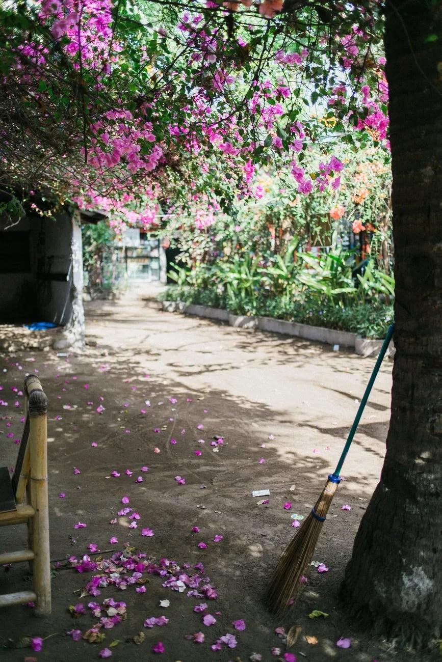 blooming tree in garden in daytime
