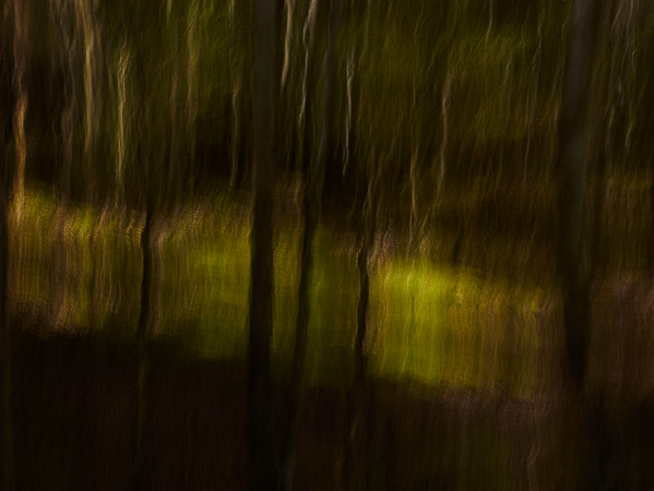 slow shutter abstract forest image