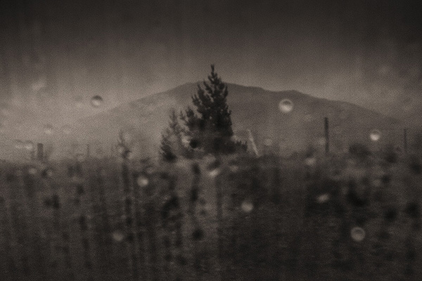 Silver Distinction - Misty Pines