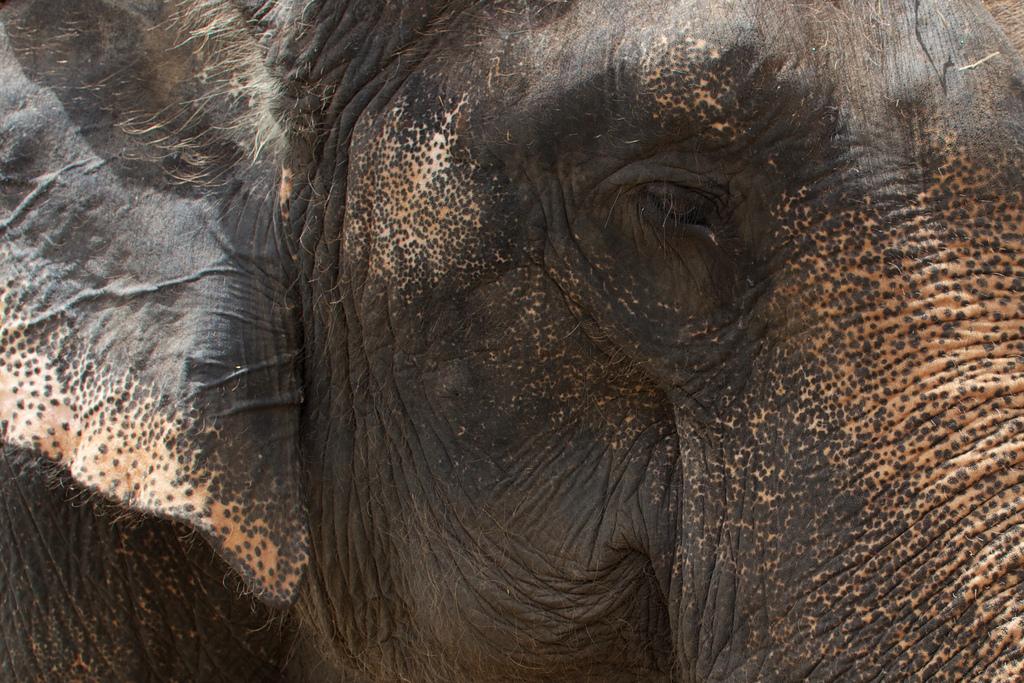 Elefanten-Kraal in Ayuthaya 24