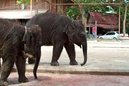 elefanten-kraal-ayuthaya-4