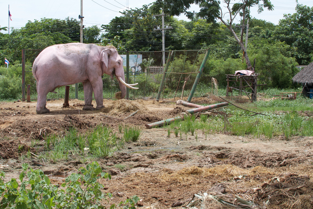 Elefanten-Kraal in Ayuthaya 20