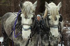 2013 horses 2
