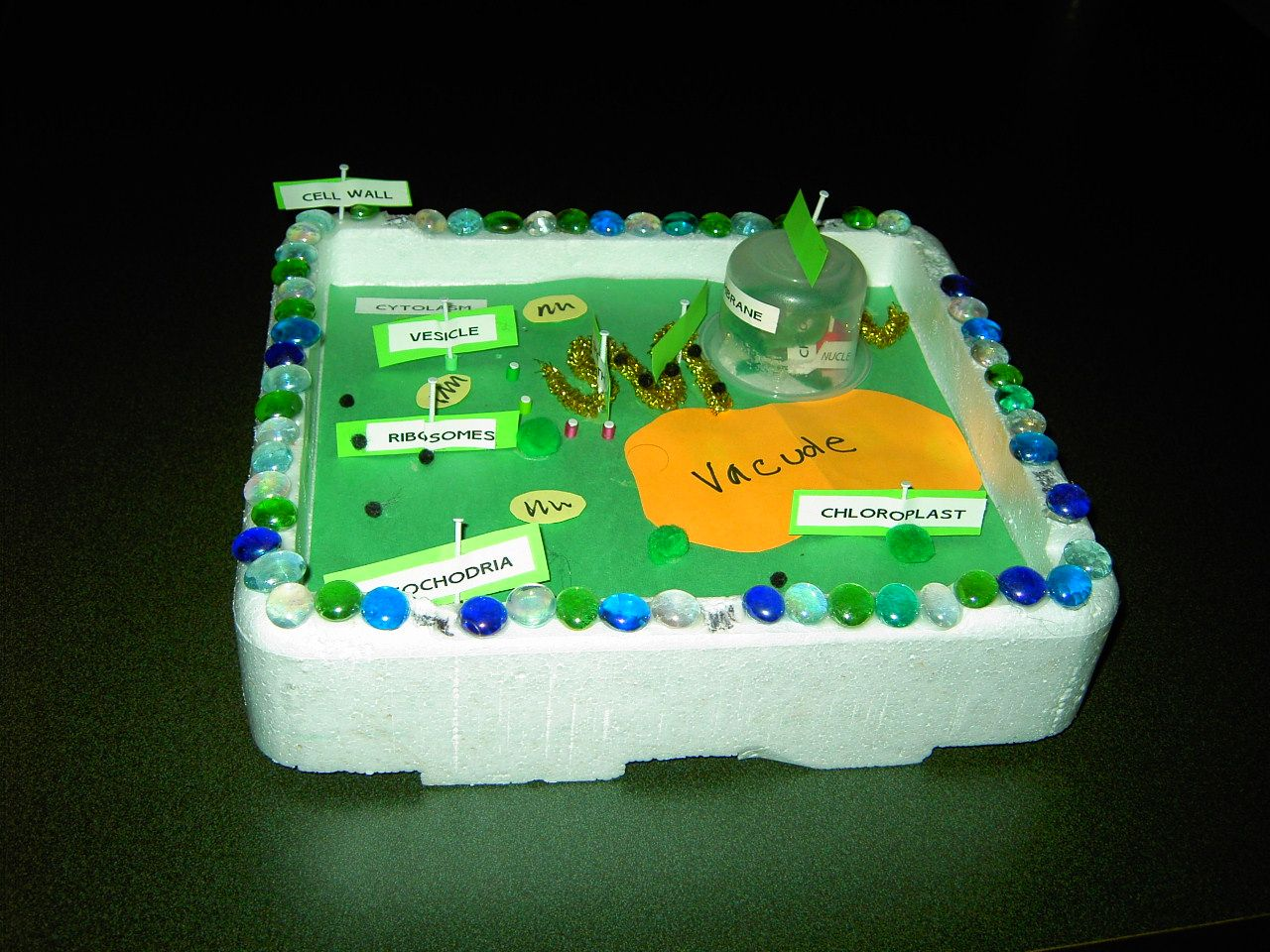 plant cell diagram project ideas chrysler radio wiring mr knapp 39s webpage