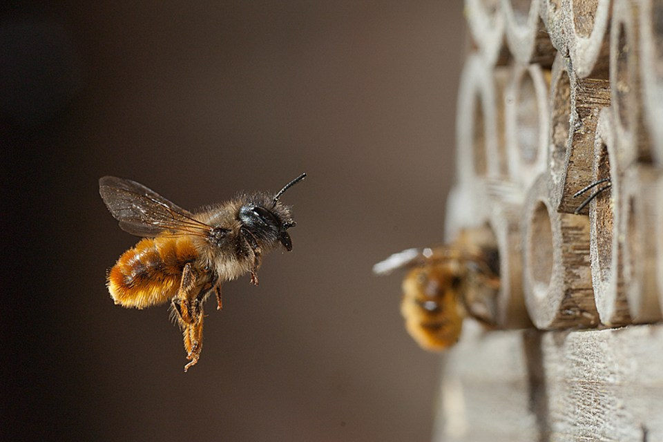 Bee by Paul Lund