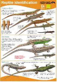 Reptile Identification Chart icon