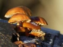 Fungi by Harry Appleyard, Furzton 28 December 2016