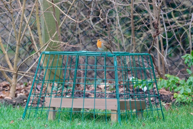 Robin, CC BY_NC_SA Peter Hassett, Shenley Church End 2 January 2019