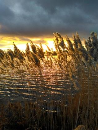 Sunset at Willen Lake ©Ann Strutton