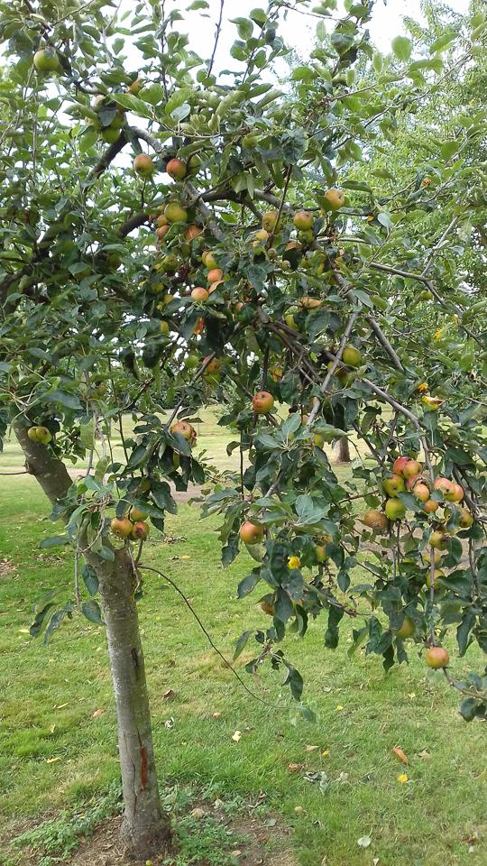 Fenny Stratford Community Orchard ©William Allen