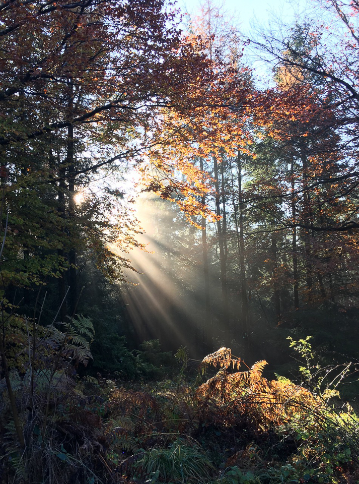 Second place, Sunlight in a forest ©Julie Lane, Clun 18 November 2019. Julie took this picture on her mobile phone.