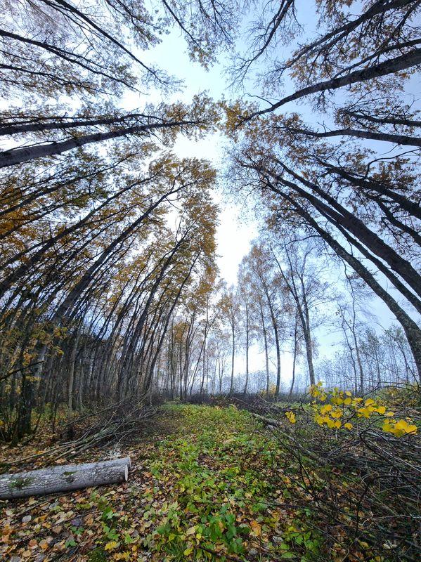 Meža ekspertu pakalpojumi