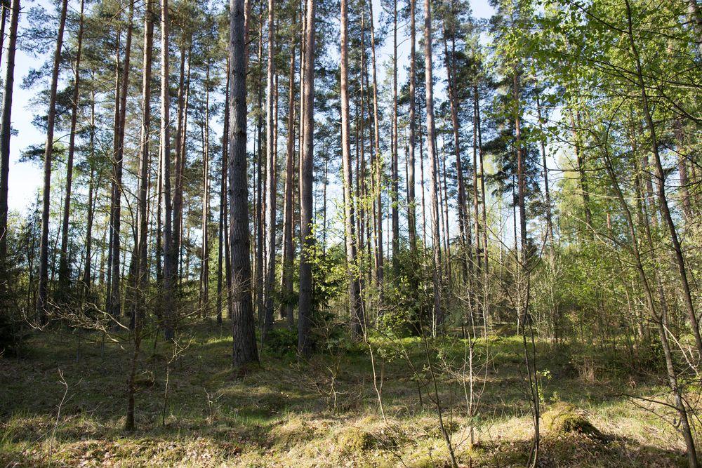Atbildes uz mežsaimnieku jautājumiem