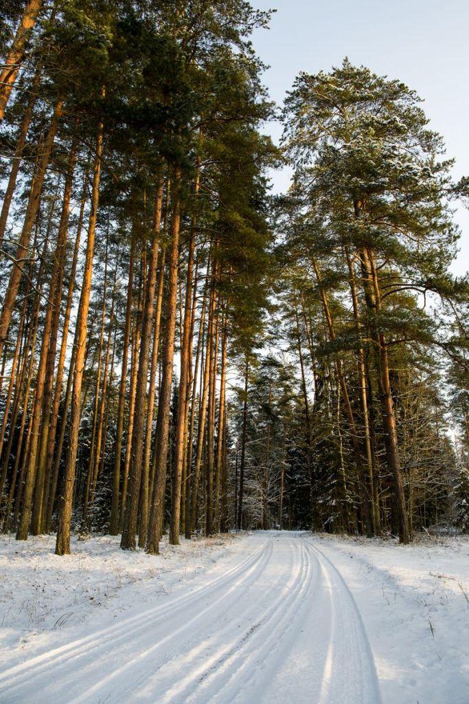 meža īpašumu iegāde