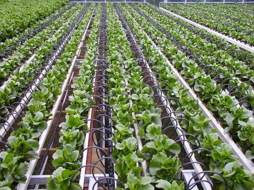 How to start drip irrigation farming plus finances