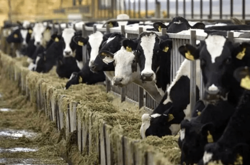 Kenya dairy sector is the most advanced in Sub Saharan Africa