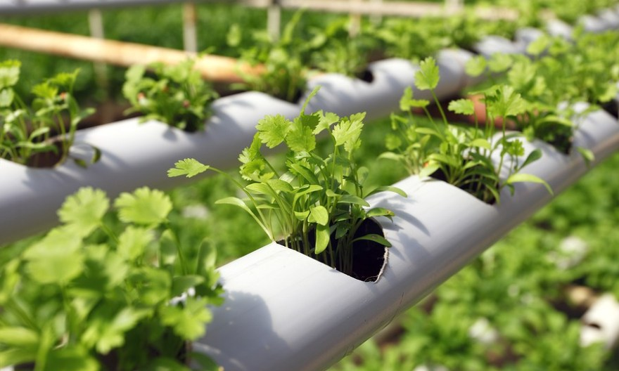 How to make hydroponic plants growth media