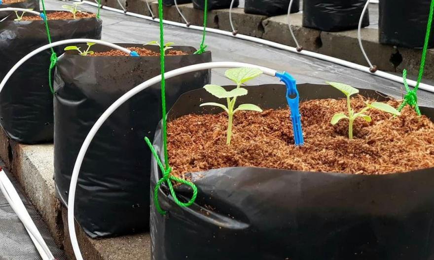 How to prepare cocopeat in hydroponic farming