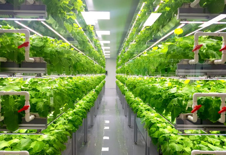 Introduction to vertical farming in Kenya